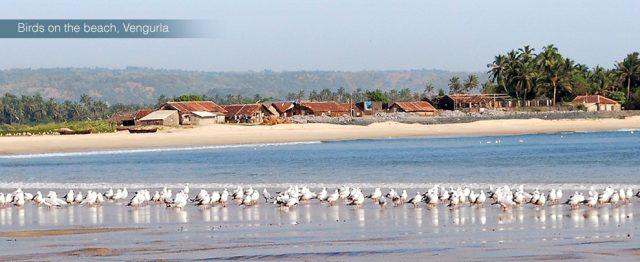 Vengurla Beach, Vengurle